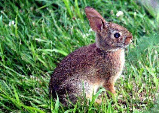 """""""Rabbit!"""""""